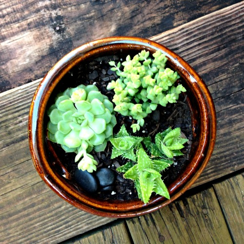 mini sucu garden8